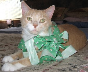 Oswald in his Easter bow.