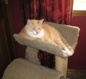 Sitting in my cat tree waiting for a birdie.