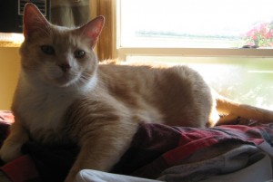 Oswald relaxing on dryer