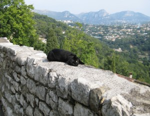 Lying on the wall overlooking the breathtaking view from Saint-Paul de Vence, our little cat friend asks for a belly rub.
