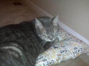 Bobbie's cat pillow is a huge hit.
