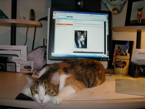 Lydia has just finished reading the blog with her kitten pictures! It was exhausting!