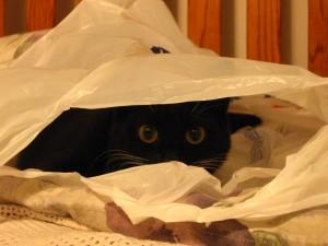 Ziggy (Becca) loves plastic bags!