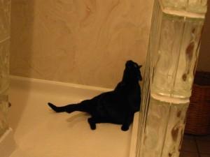 Zoe (Gladiola) bathing.