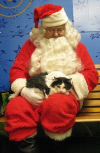 Santa Claus, Chuck Gaul, with last year's Christmas kitty, B. B.