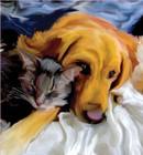 dog & cat5