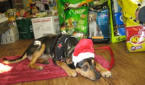 One of Columbus Dog Connection's adoptable pups hopes that some of the goodies are for him this Christmas.
