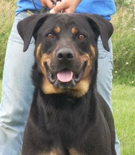 Diesel has also been waiting a long time at the Humane Society of Madison County.