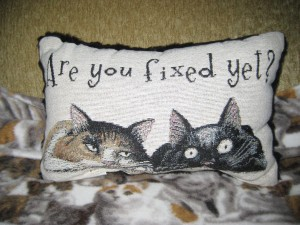 This pillow says it all about the philosophy of Black and Orange Cat Foundation!