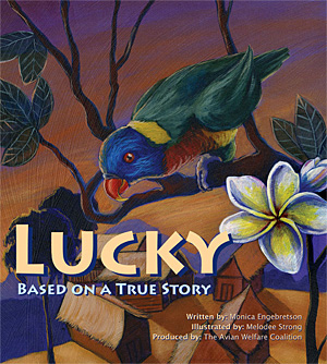 bannerluckycover-300