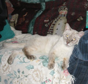 Simon is now safe and relaxing in foster care.